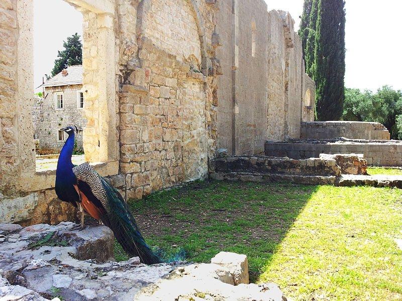 Peacocks in Lokrum
